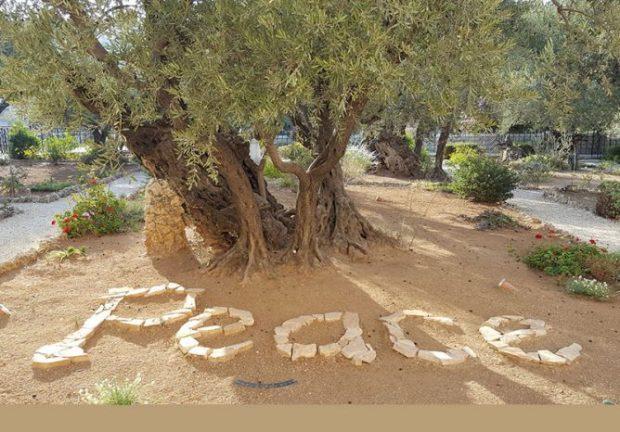peace-668x466